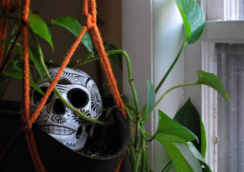 Healthy green leaves around a ceramic skull in a hanging indoor planter